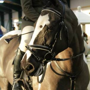 photo courtesey baileys horse feeds