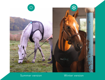 summer-winter-version